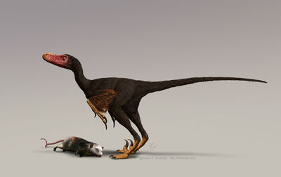 Bambiraptor w turkey vulture colours for web-based news releases only Julius Csotonyi.jpg