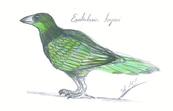 Eoalulavis