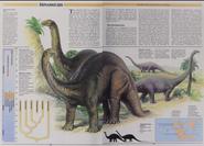 Apatosaurus and Diplodocus