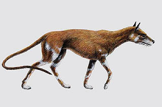 Daphoenus