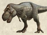 Tyrannosaurus/Gallery