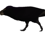 Alamotyrannus