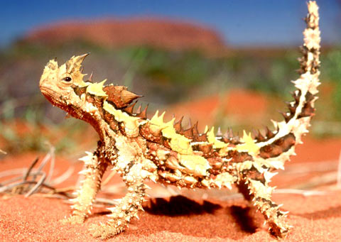 Lepidosauromorpha