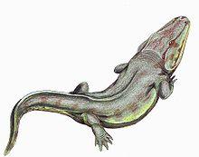 Rhinesuchus