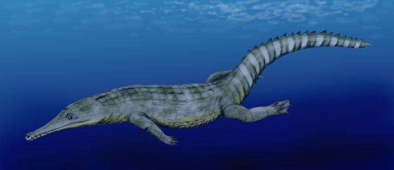 Guarinisuchus