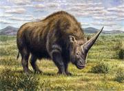 Art impression of Elasmotherium.png