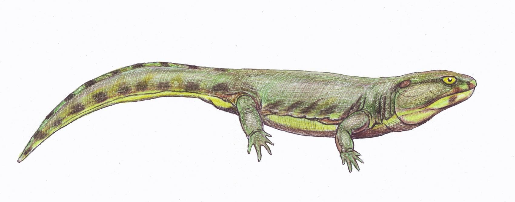 Karpinskiosaurus
