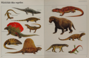 Mammal like reptile collection