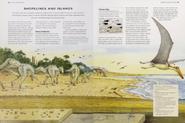 Shorelines and islands