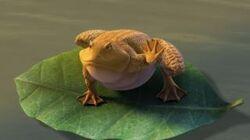 One Big Frog.jpg