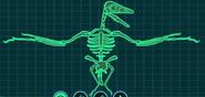 Скелет авизавр