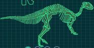 Скелет рабдодон
