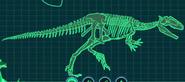 Скелет гиганотозавр