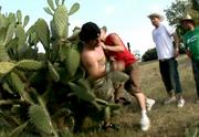 Cactus fall2.png
