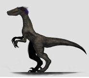 Raptor standing