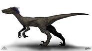 Raptor running