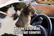 Fear and loathing cats.jpg
