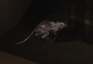 05 white rat2