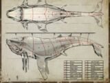 Вивисекция кита