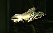 Hagfish, closeup