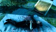 Jessamine dead void kod