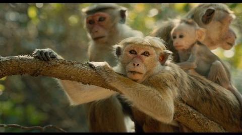 Disneynature's Monkey Kingdom - Official US Trailer 2