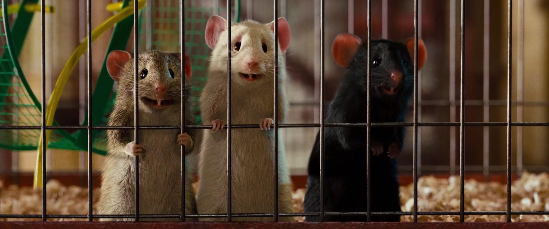 The Mice