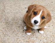 Puppy Eeys