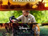 A Magia do Disney's Animal Kingdom