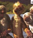 Zini with girl lemurs