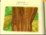 Owl's Book
