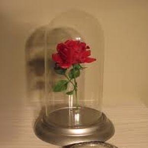 The-enchanted-rose.jpg