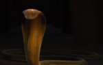 Slither defeated!