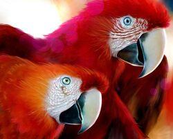 Red parrots wallpaper 50818.jpg