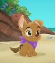 Jake-Pirate-Pup