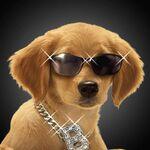 B-Dawg wearing sunglasses