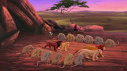 81-todas as leoas do bando saúdam Simba e Nala, Kovu e Kiara