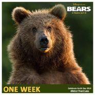 Bears One Week Poster