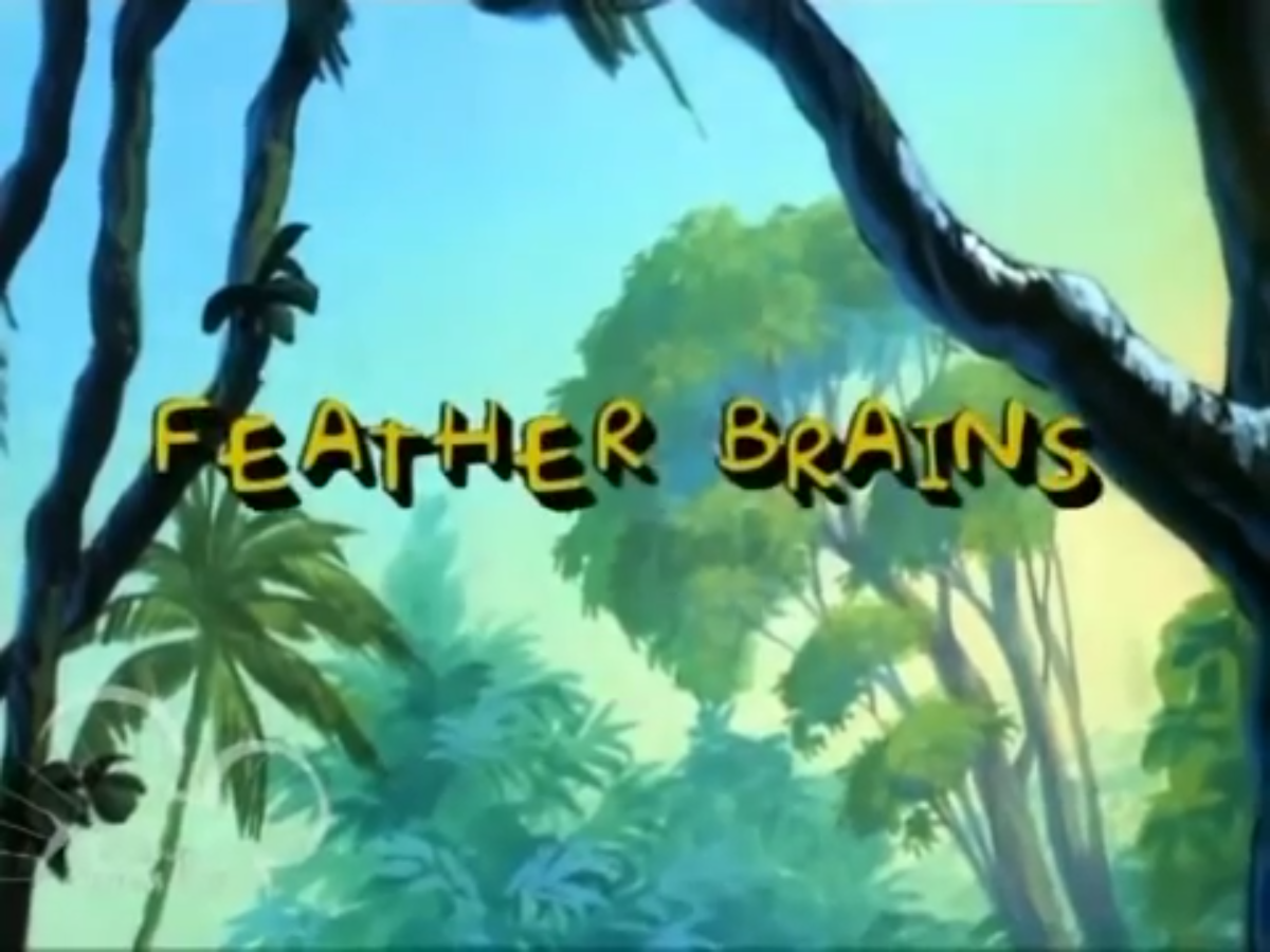 Feather Brains