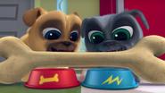 Puppy Dog Pals (001)