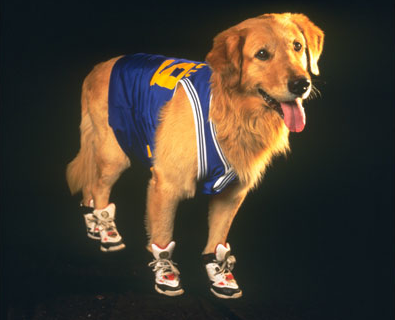 Air Bud (dog)