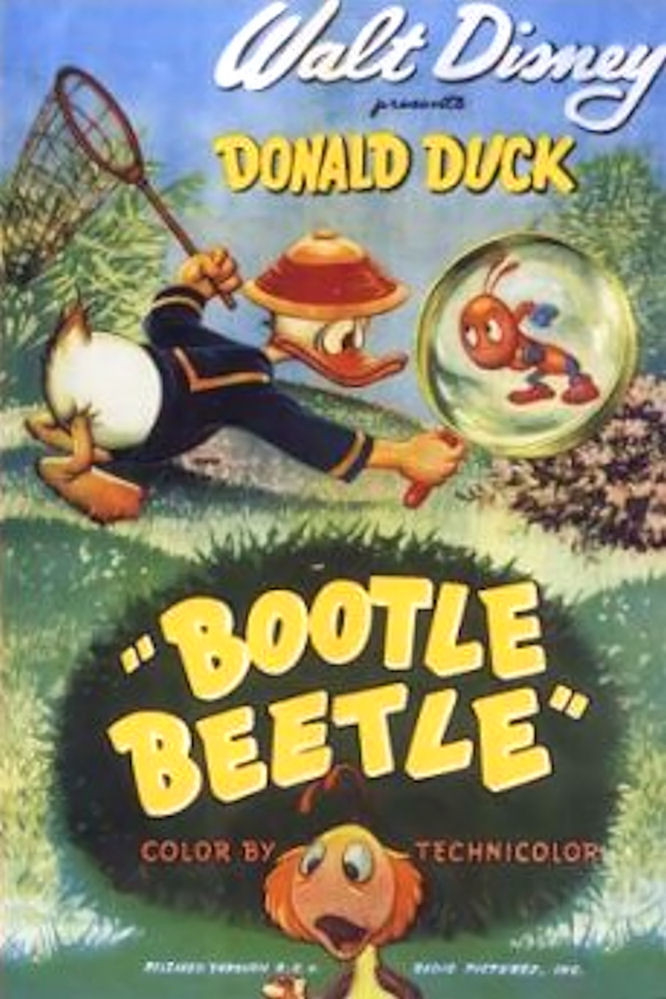 Bootle Beetle (short)