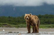 Bears-movie-image1