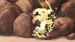 The-golden-zebra (594)