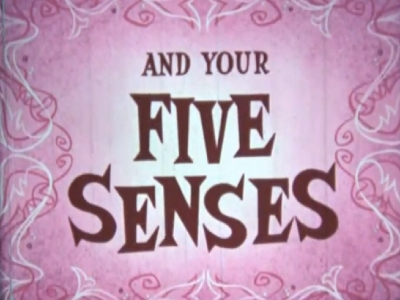 You and Your... Five Senses