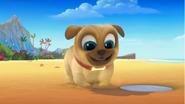 Puppy Dog Pals (011)