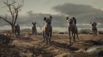 Hyenas 2019
