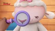 Close up shot lambie's nose
