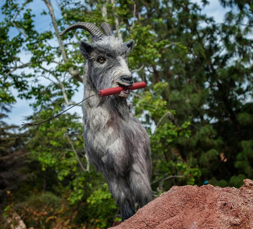 Billy the Disney Goat