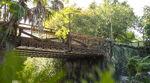 Pandora Landscape 17